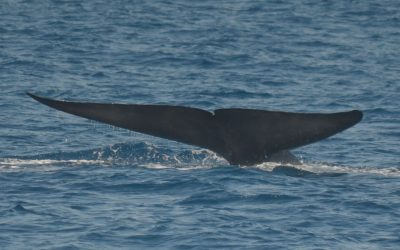 5 Different Types of Whales You Can Find Off the Coast of San Diego