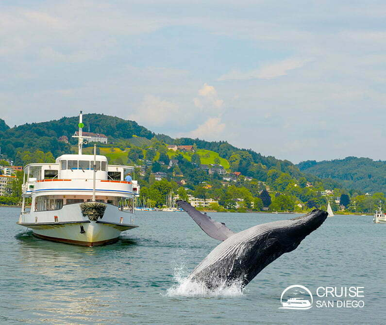 Whale watching in San Diego | Cruise SD